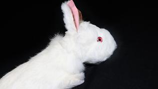 Spring animal - konijn