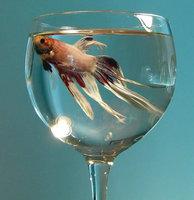 Fish Tip