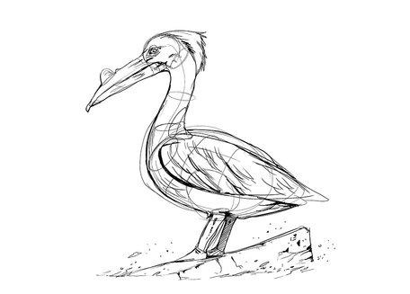 Pelican Gimmick - Akira Ishizaki