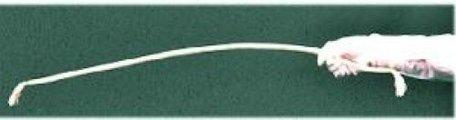 Stijf touw (stiff rope)